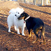 DIVA (puppy) & BOBO (aka dumbo)