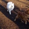 BOBO (aka dumbo) & Mijo, Robin.