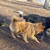MIJO, harvey (guide pup), diva (puppy)