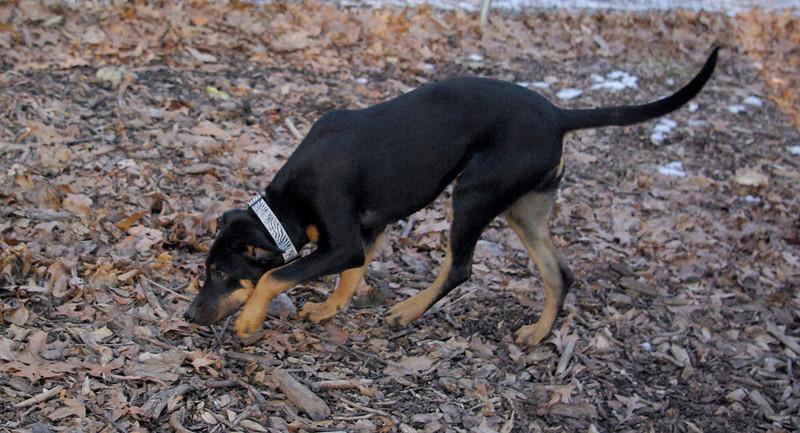 DIVA (puppy) 2