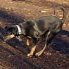 DIVA (puppy) 3