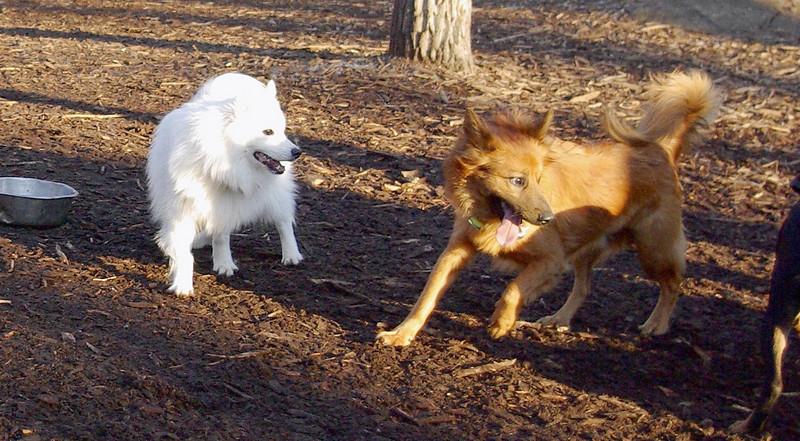 MIJO & BOBO (aka dumbo)