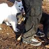 DIVA (puppy) & BOBO (dumbo)