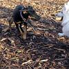 DIVA (puppy) & BOBO (dumbo) 4