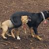 DOLCE (puppy) & DIVA (puppy) 4.