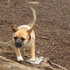 DOLCE (puppy) & DIVA (puppy) 6
