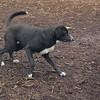 DOLCE (puppy) & BLACKJACK, DIVA (puppy)
