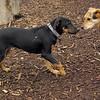 DIVA (puppy), MADDIE 2