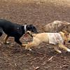 DOLCE (puppy) & DIVA (puppy)