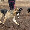 KEISAR (shepherd pup) & his bowl 3