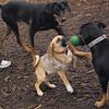 DOLCE (puppy) & DIVA (puppy) 3