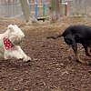 BUCCA (wheaton), Rex (hound doberman)