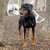 REX (hound, doberman).