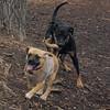 DOLCE (puppy) & DIVA (puppy) 7