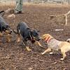 DOLCE (pup), DIVA (pup), REX