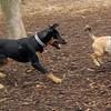 DOLCE (puppy) & DIVA (puppy) 2