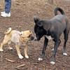 DOLCE (puppy) & BLACKJACK