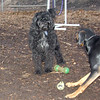 DORA (portuguese water dog), REX (hound, doberman)