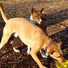 Shamus & Monty (frisbee)