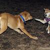 FOXI & MAX (pup)