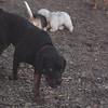 EUBIE (rottweiler  pup) 6