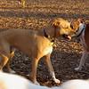 MONTY & BUBBA (boxer pup)
