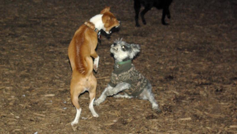 Chloe & Minnie (the big fight)