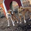 Bubba (boxer pup), Monty