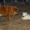 BISCUIT, MIA (chow) 2