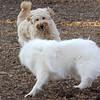 LUCY (goldendoodle), BOBO (aka dumbo).