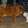 BISCUIT, MIA (chow)