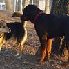 EUBIE (rottweiler  pup) & MADDIE