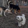 BISCUIT, Carley (beagle), MADDIE.
