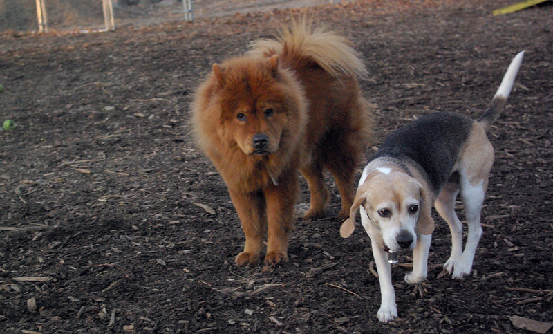 MIA (chow), CARLEY (beagle,11yr.).