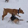 CARLEY (beagle), MAX (ridgeback pup)