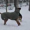 MADDIE & MOSS (ridgeback), Max (r-back pup)