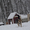 MADDIE & MAX (ridgeback pup)