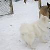 BOBO (aka dumbo), ZOE (shepherd).