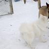 ZOE (shepherd), BOBO (aka dumbo)