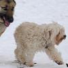 NELLY (of Zoe shepherd, nelly) 2