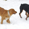 EUBIE & SHIELA (duck tolling retriever)