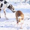 ROCCO (bulldog, first time), Wilma, Max