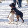ROCCO (bulldog, first time), Eubie 2