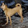 CHARLIE (dingo boy) 5
