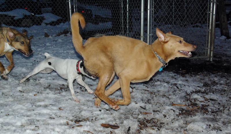 CHARLIE (dingo boy) & lexie, roxy