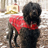 MOBY (portuguese water dog) 3