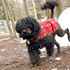 MOBY (portuguese water dog) 4