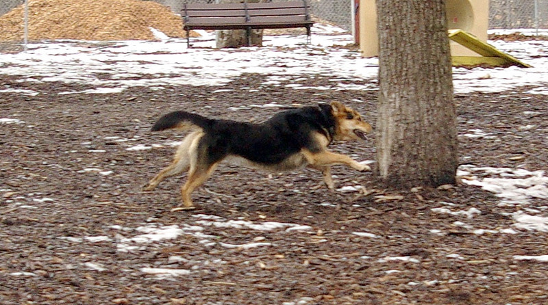 Maddie, run, ossining