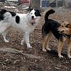 MARLEY (boy pup) & MADDIE 7