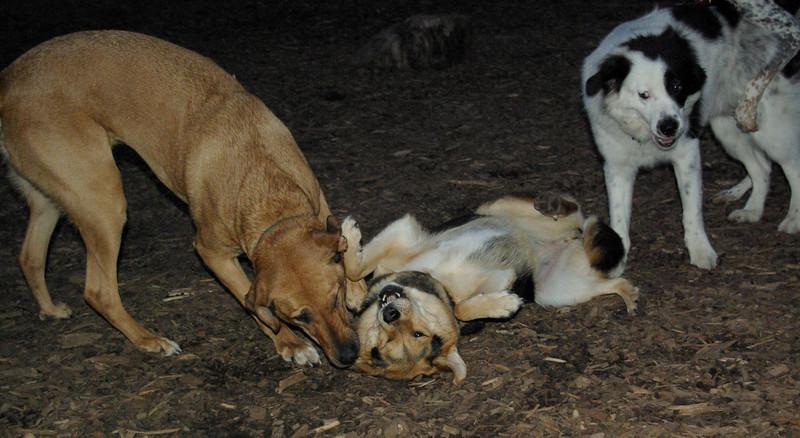 Buffy, Maddie, Marley (boy pup)